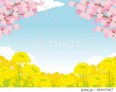 桜と菜の花 背景イラスト 46447067