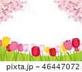 桜 チューリップ 春のイラスト 46447072