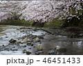 七谷川の桜 46451433
