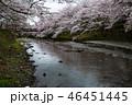七谷川の桜 46451445