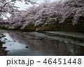 七谷川の桜 46451448