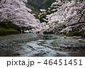 七谷川の桜 46451451