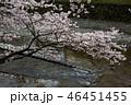 七谷川の桜 46451455