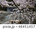 七谷川の桜 46451457