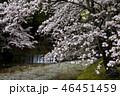 七谷川の桜 46451459