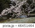 七谷川の桜 46451464