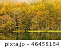 御射鹿池 紅葉 池の写真 46458164