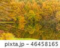 御射鹿池 紅葉 池の写真 46458165