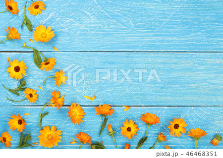 Calendula. Marigold flower on blue wooden background with copy space for your text. Top view 46468351