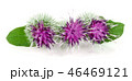 46469121