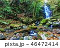 滝 紅葉 木の写真 46472414