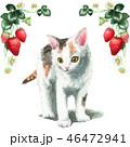猫 花 三毛猫のイラスト 46472941