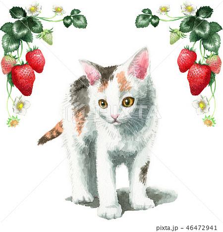 水彩で描いたいちごのフレームと三毛の子猫 46472941