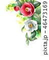 椿 花 つぼみのイラスト 46473169