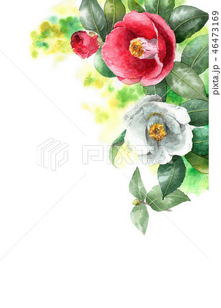 水彩で描いた紅白椿の年賀ハガキ素材 46473169
