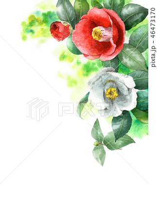 水彩で描いた紅白椿の年賀ハガキ素材 46473170