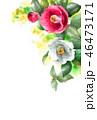 椿 花 つぼみのイラスト 46473171