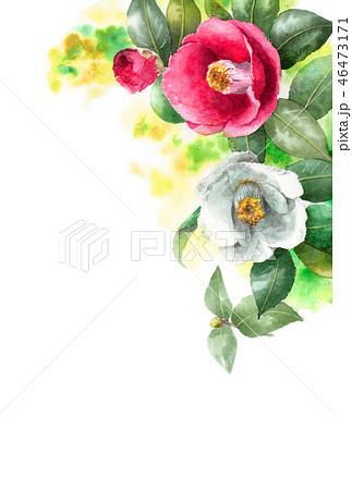 水彩で描いた紅白椿の年賀ハガキ素材 46473171