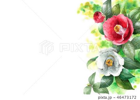 水彩で描いた紅白椿の年賀ハガキ素材 46473172