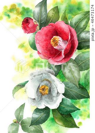 水彩で描いた紅白椿の年賀ハガキ素材 46473174