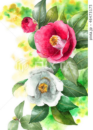 水彩で描いた紅白椿の年賀ハガキ素材 46473175