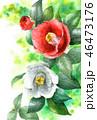椿 花 つぼみのイラスト 46473176