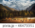 Horses walking free in meadow with snow capped mountain backdrop 46473351