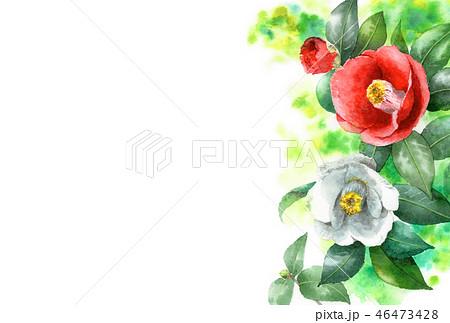 水彩で描いた紅白椿の年賀ハガキ素材 46473428