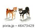 年賀状 干支 犬のイラスト 46473429