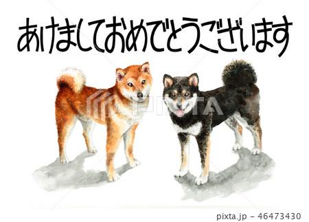 柴犬の賀詞入り年賀ハガキ素材 46473430