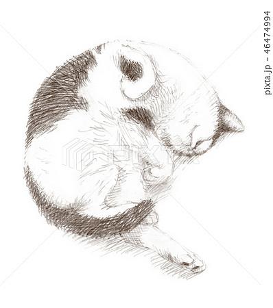 白と黒の猫の鉛筆クロッキー 46474994