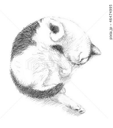 白と黒の猫の鉛筆クロッキー 46474995
