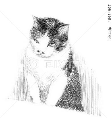 白と黒の猫の鉛筆クロッキー 46474997