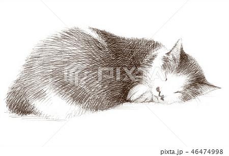白と黒の猫の鉛筆クロッキー 46474998