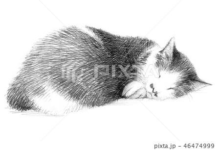 白と黒の猫の鉛筆クロッキー 46474999