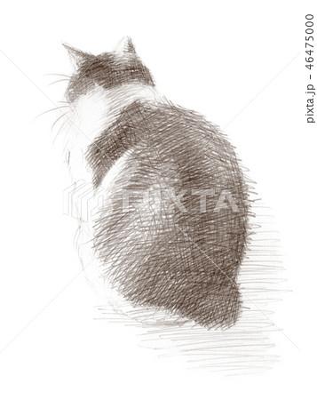 白と黒の猫の鉛筆クロッキー 46475000