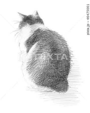 白と黒の猫の鉛筆クロッキー 46475001