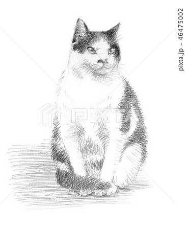 白と黒の猫の鉛筆クロッキー 46475002