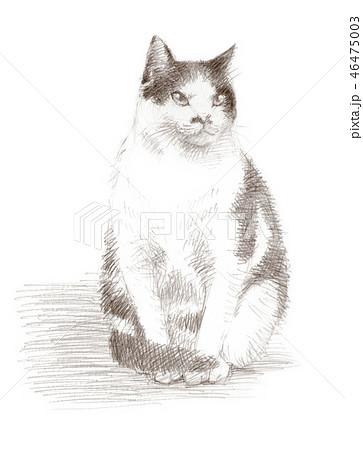 白と黒の猫の鉛筆クロッキー 46475003