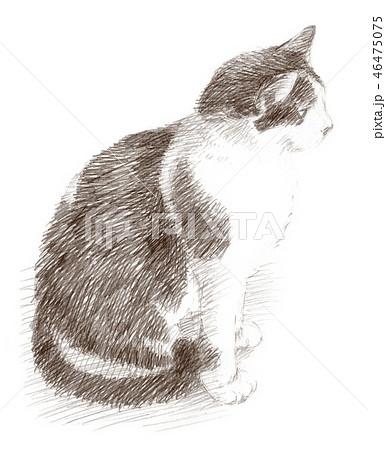白と黒の猫の鉛筆クロッキー 46475075