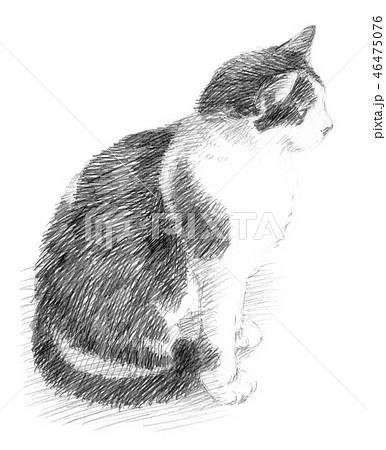 白と黒の猫の鉛筆クロッキー 46475076
