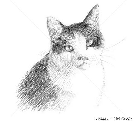白と黒の猫の鉛筆クロッキー 46475077