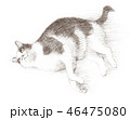 白と黒の猫の鉛筆クロッキー 46475080