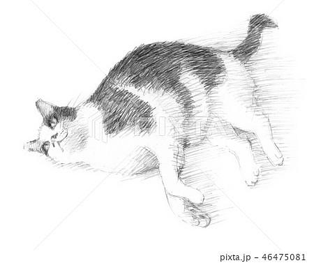 白と黒の猫の鉛筆クロッキー 46475081