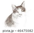 白と黒の猫の鉛筆クロッキー 46475082