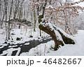 木 森林 林の写真 46482667