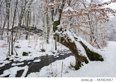tree by the creek in winter forest 46482667