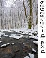 森林 林 森の写真 46482669