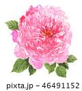 花 薔薇 ピンクのイラスト 46491152
