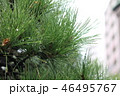旧田中邸の庭の木 46495767